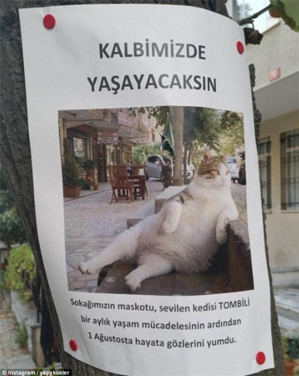 Mẩu giấy thông báo sự ra đi của Tombili.(Ảnh: Instagram)