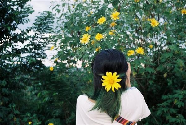 Hoa Dã quỳ bắt đầu bừng nở khinhững con gió lạnh chớm đông bắt đầu ùa về.(Ảnh: Rok_Kiz)