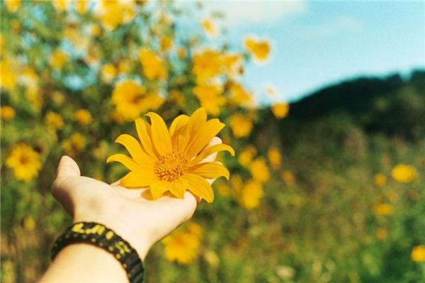 Những bông hoa như thêm rực rỡ sắc màu dưới bàn tay nâng niu của lãng khách. (Ảnh: soinguyen)
