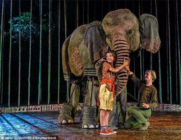 Vở kịch về sựsống sót kì diệu của Amber và lòng dũng cảm của chú voi Ninh Nong dự kiến sẽ được tổ chức vào tháng 12 tới.