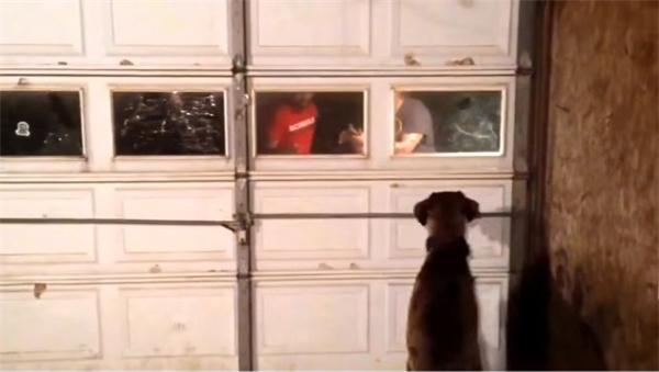 Nhưng chú chó đã bị lạc và mất tích trong một lần ra ngoài dạo chơi. (Ảnh: Internet)