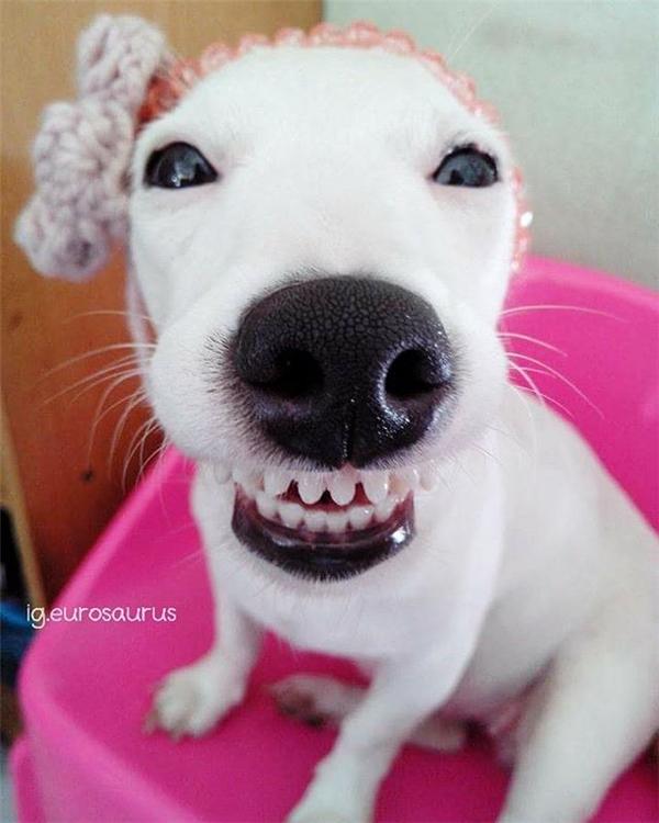 Dù sao đi nữa, cô chó đáng yêu này cũng đem đến cho mọi người tiếng cười sảng khoái.