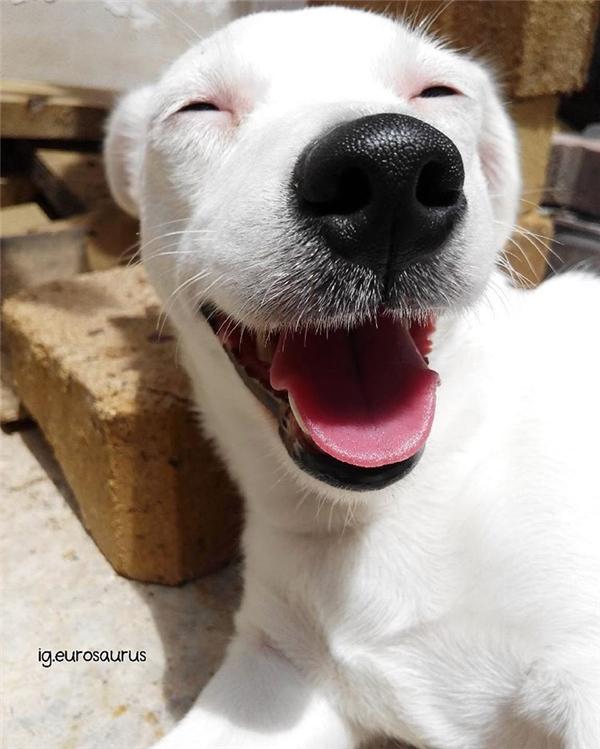Cô chó này có thân hình nhỏ nhắn cùng bộ lông trắng muốt và khuôn mặt vô cùng dễ thương.