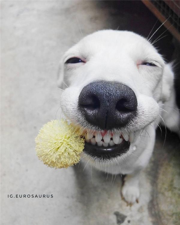 Người ta thích Euro vì nó giúp họ xả stress, đem đến cho họ tiếng cười sảng khoái.