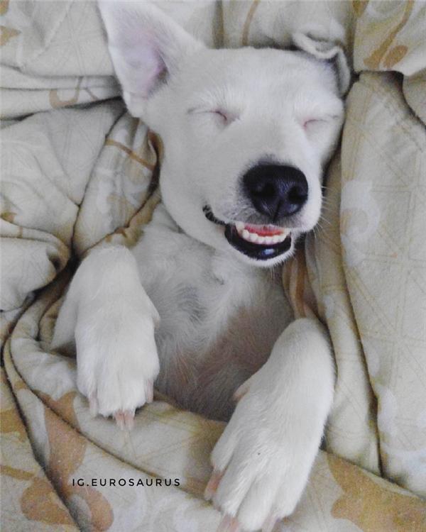 Cười nhăn răng với cô chó lúc nào cũng cười không ngậm miệng được
