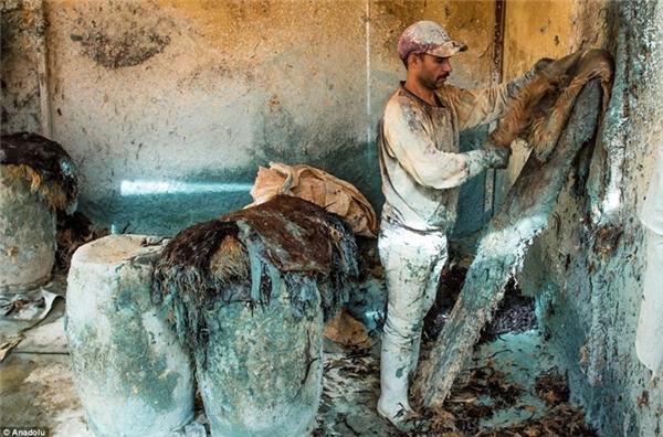 Những loại da thường được sử dụng làcừu, dê, lạc đà và bò...Sau khi thu gom về, công nhân sẽ phân loại chúng ra rồi đem ngâm khoảng 2-3 ngày vào những hầm lò chứa hỗn hợp vôi,nước, muối và nước tiểu bò để loại bỏ lông thừa và mỡ động vật còn dính trên da. (Ảnh:Dailymail)