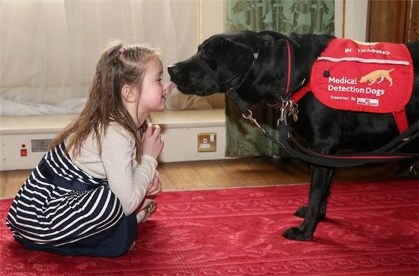 Chó có khả năng phát hiện bệnh tiểu đường nhờ những cảm nhận về mùi. Ảnh: Chris Jackson / Getty Images.