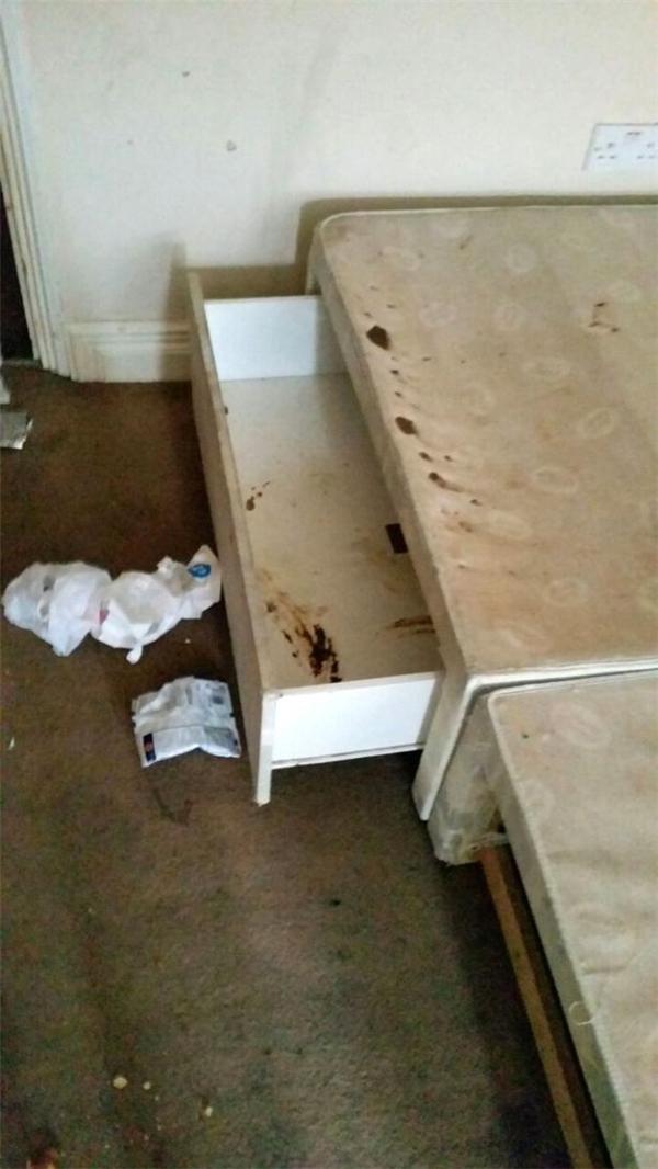 Phân xuất hiện trong cả ngăn tủ.