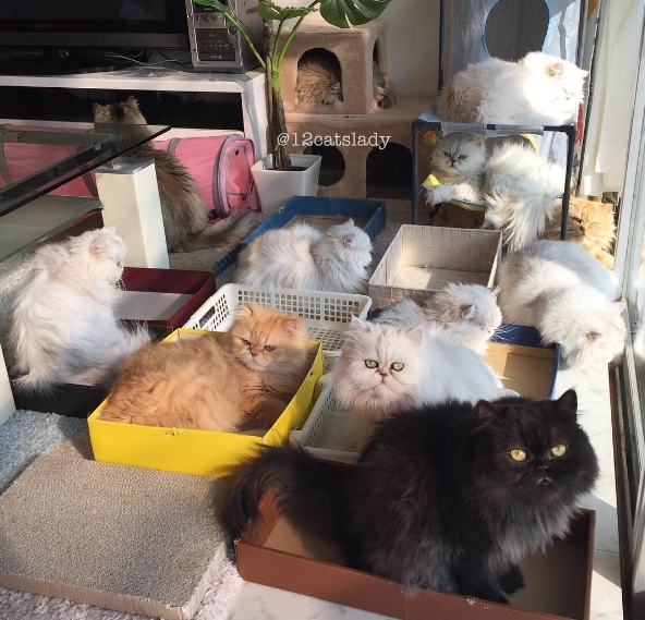 Người phụ nữ trẻ không sợ cô đơn vì sống chung với 12 chú mèo
