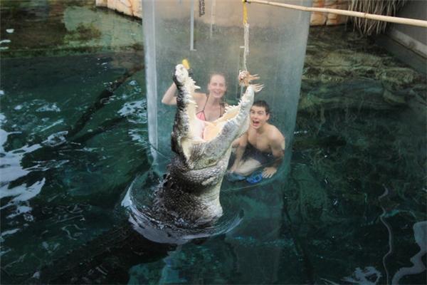 """Du khách thi nhau trải nghiệm """"bơi"""" cùng cá sấu trong Lồng tử thần"""