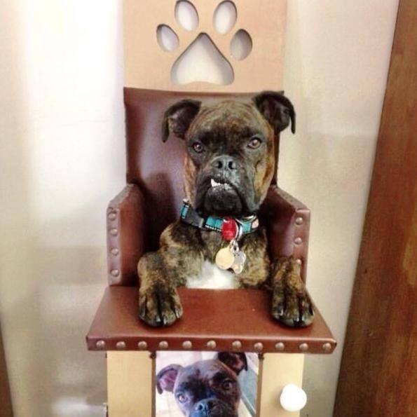 Chiếc ghế ăn của Gremlin
