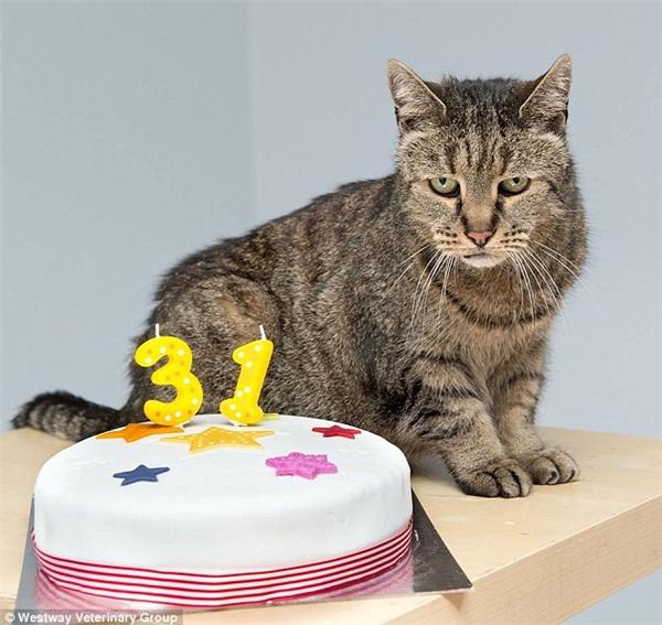 Tháng 3 vừa qua, chú mèo này đón sinh nhật lần thứ 31 của mình.