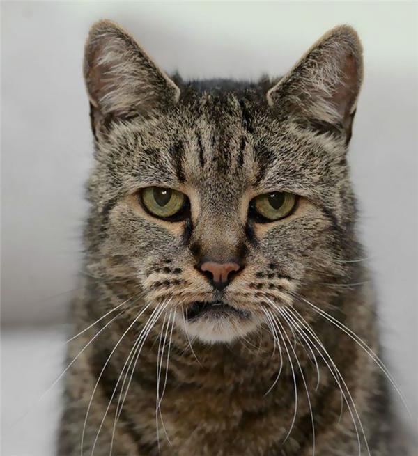 Các cơ quan đánh giá cần có thực hiện nhiều nghiên cứu và xét nghiệm để tìm ra tuổi thật của mèo Nutmeg.
