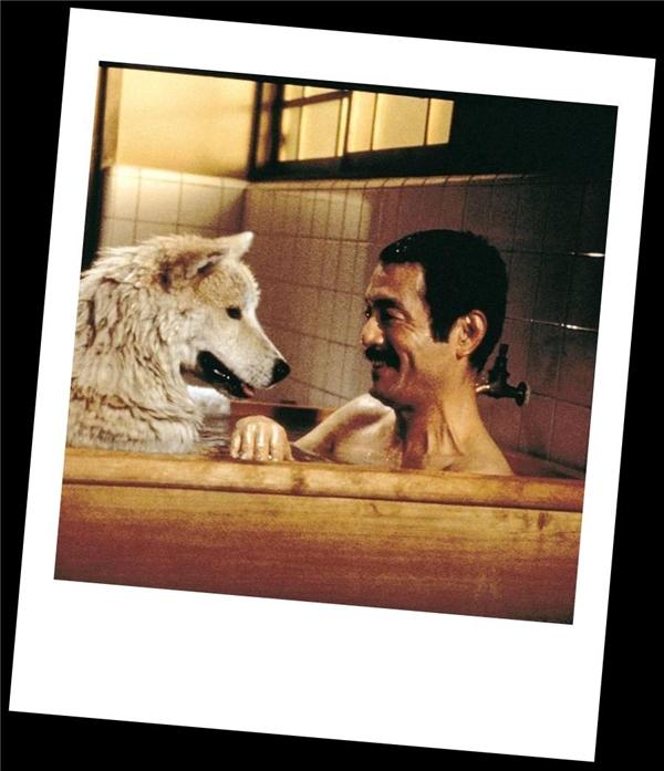Người xem cũng phải nước mắt ngắn nước mắt dài trước tình cảm của chú chó dành cho giáo sư. (Ảnh: Internet)