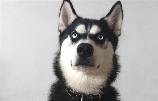 Thế giới của con người là hình ảnh còn của loài chó là mùi hương.