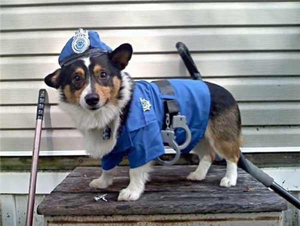 """Nhờ sở hữu khứu giác nhạy bén vượt trội mà loài chó trở thành """"cảnh khuyển"""" hỗ trợ cơ quan an ninh trong việc điều tra án."""