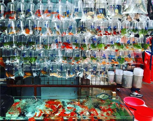 Chợ cá Vượng Giác.(Ảnh: Instagram)