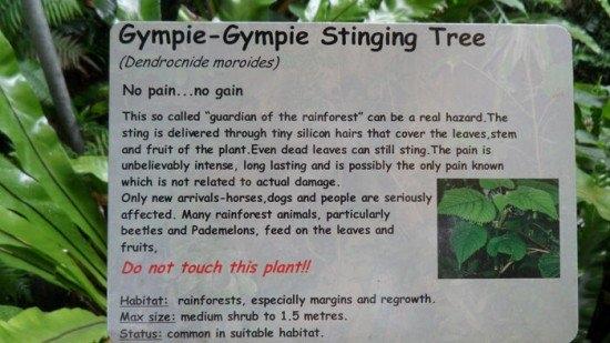 Biển cảnh báo về sự nguy hiểm của cây Gympie-Gympie.