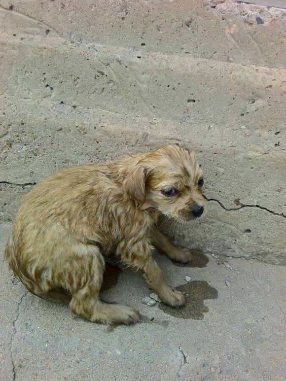 Sau khi đuổi theo mới biết chú chó đi tìm thức ăn về cho bạn nó bị rơi xuống nước.