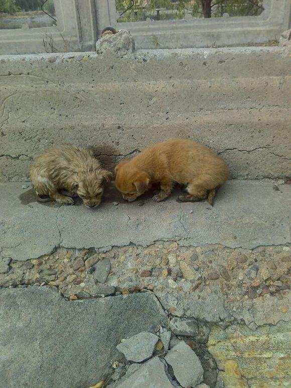 Chú chó sau khi được cứu, vừa lạnh vừa đói, vội vã ăn nốt đống thức ăn cùng bạn mình.