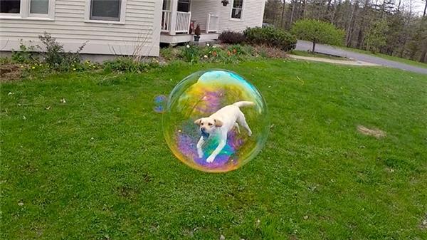 Chú chó tội nghiệp đang vùng vẫy tìm cách thoát ra khỏi quả bóng quái ác.