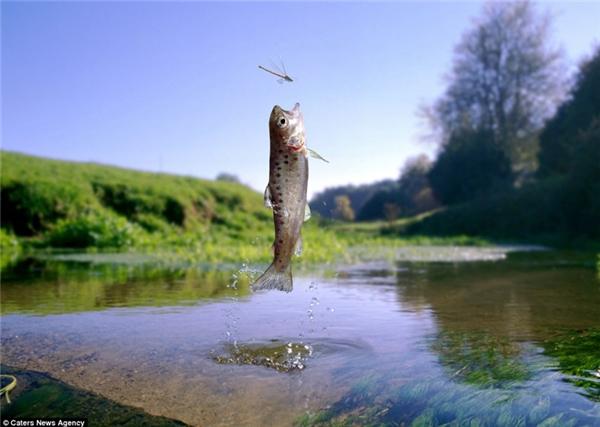 Theo bạn con cá có bắt được con chuồn chuồn không?