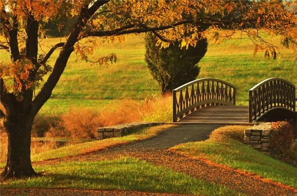 Parkville, Missouri: Nằm lẩn khuất ngay vùng ngoại ô thành phố Kansas, thị trấn Parkville nổi tiếng với những cửa hàng đồ cổ có từ hàng thế kỉ qua. Hơn nữa, sẽ chẳng còn gì tuyệt bằng được rảo bước trên những con đường mòn phủ kín lá vàng rơi như thế này.