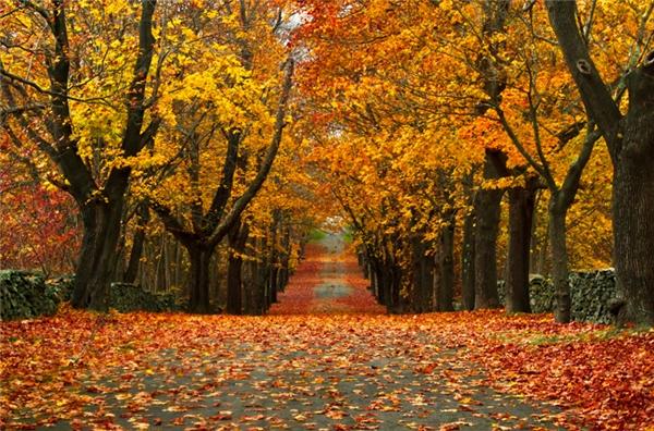 Bristol, Rhode Island: Những con đường tít tắp, trải dài đến vô tận, những tán lá xen lẫn sắc vàng, cam, đỏ, khiến người ta có cảm giác như đang lạc vào chốn thần tiên nào đó.