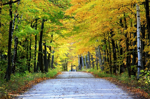 Fish Creek, Wisconsin: Ai mà chẳng muốn được một lần lướt qua những con đường trải dài vô tận với tán lá đỏ-vàng rợp bóng trên đầu như ở vùng thị trấn yên tĩnh này.