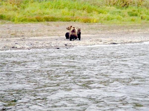 Những chú gấu con đứng tựa vào nhau, ngơ ngác không biết chuyện gì xảy ra. (Ảnh: Mirror)