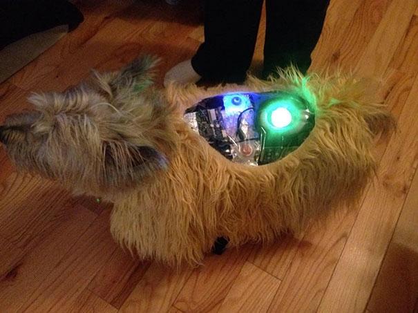 Có ai học chuyên ngành điện tử cho em hỏi tí, làm sao để sửa cho chú chó máy này đây?