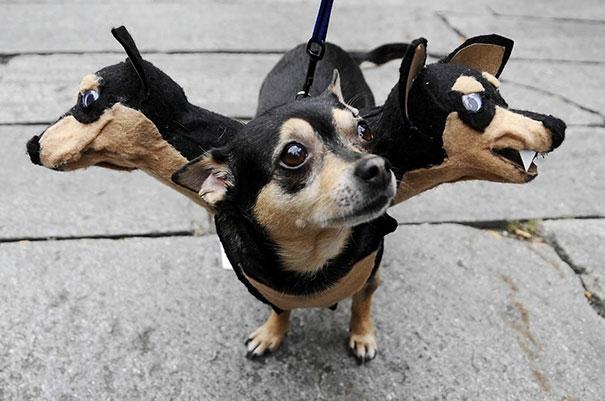 Nghe đồn chó địa ngục ba đầu đáng sợ lắm không ngờ nhìn cũng dễ thương ghê.