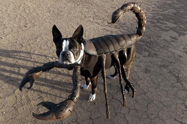 Quái vật đầu chó thân bọ cạp đáng sợ quá đi mất.