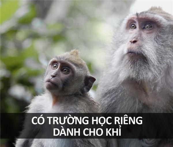Trường học này có tên là Thani Monkey College, tại đây các học viên khỉ sẽ được huấn luyện mọi tiết mục biểu diễn đường phố cũng như hái dừa.