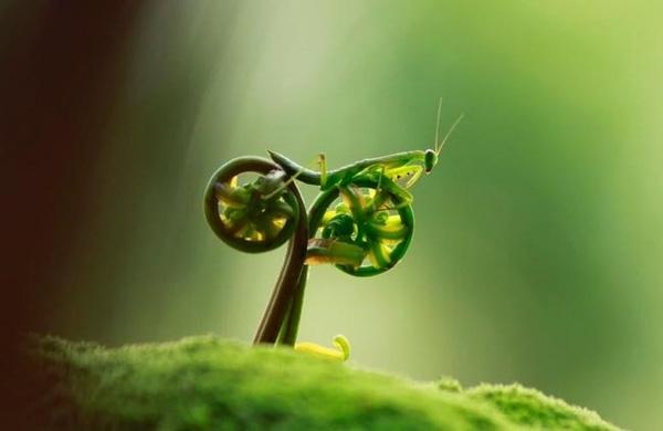 Là bọ ngựa, chiếc xe máy thủ công hay chỉ là mầm cây? (Ảnh: Internet)