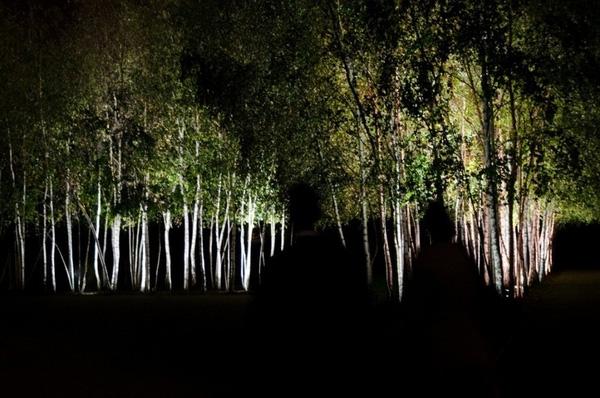 Lối đi tối mịt giữa những hàng cây qua lăng kính của nhiếp ảnh gia tựa 3 oan hồn. (Ảnh: Internet)
