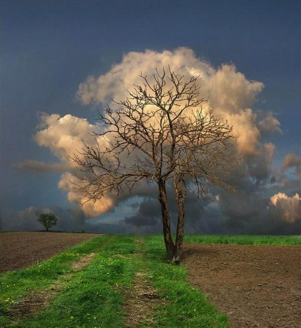Để bắt được thời điểm mây tụ sau những tán cây là cả một nỗ lực của nhiếp ảnh gia. (Ảnh: Internet)