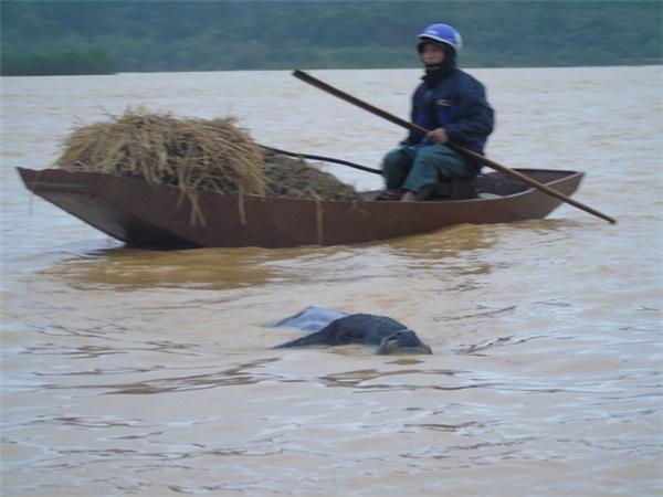 Thắt lòng nhìn miền Trung từng ngày vẫy vùng giữa dòng nước lũ
