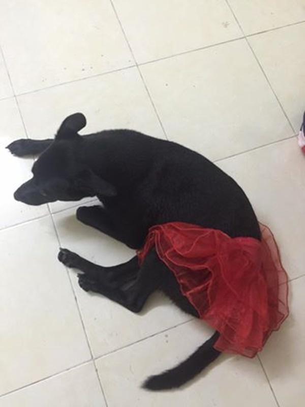 Không chỉ ra đường mà ở nhà cô nàng cũng được diện váy diêm dúa như công chúa.(Ảnh: Internet, Nguồn: Tổng hợp)
