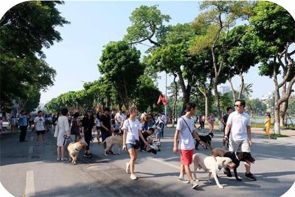 Những con thú cưng xuất hiện trên phố đi mộ ngày càng nhiều.