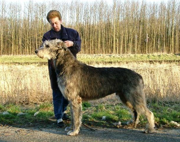 Liệu bạn có muốn nuôi một chú chó thiên hạ đệ nhất khủng như cô ấy?