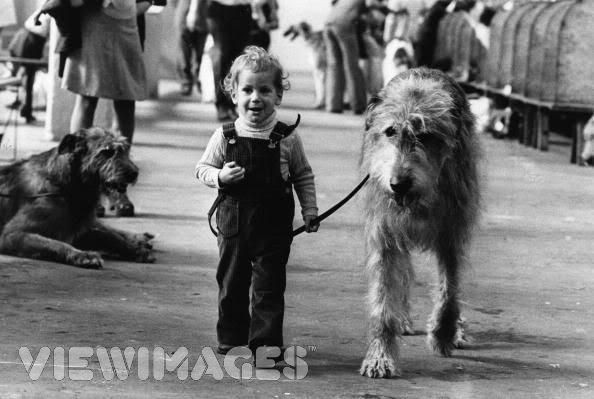 Irish Wolfhound là giống chó dễ thuần chủng và được nhiều gia đình nuôi dưỡng. (Ảnh: Internet)