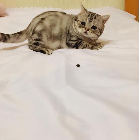 Ủa cái gì trên giường vầy nè?