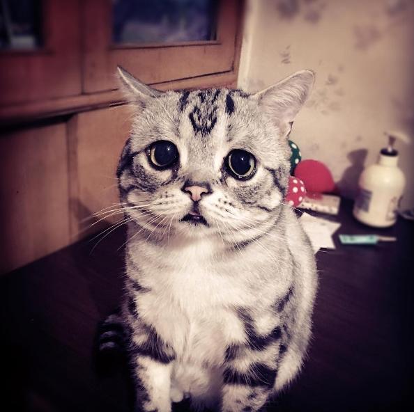Huhu, ai lấy sổ gạo của mình mất rồi?