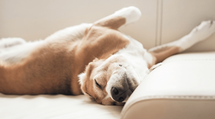 Tiết lộ về những gì chó thường mơ khiến không ít người nuôi chó xúc động. (Ảnh: Internet)