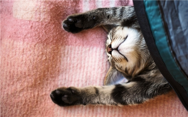 """Giấc mơ của mèo diễn racó phần """"táo bạo"""" hơn. (Ảnh: Internet)"""