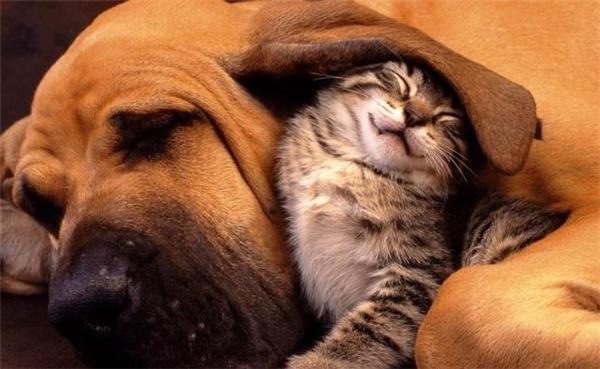 Làm sao để thú cưng không gặp ác mộng? (Ảnh: Internet)