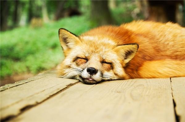 Thời gian chìm sâu vào giấc ngủ của mỗi động vật khác nhau tùy vào kích thước của chúng. (Ảnh: Internet)