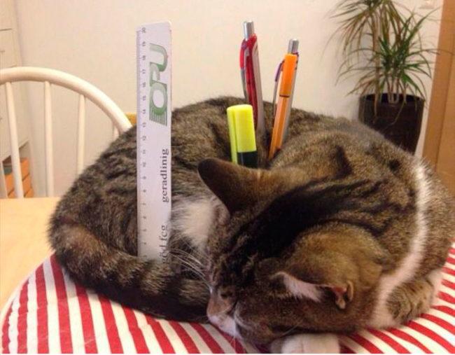 Nhưng đôi lúc cũng có thể tận dụng chúng để làm ốngcắm bút tạm thời. (Ảnh: Twitter)