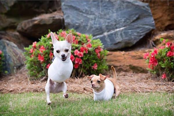 Kanga và Roo đang sống cực kìhạnh phúc dưới sự chăm sóc của chủ mới.